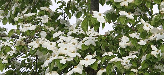 Plantes fleurs blanches dj cr ation - Plantes filtrantes bassin rennes ...