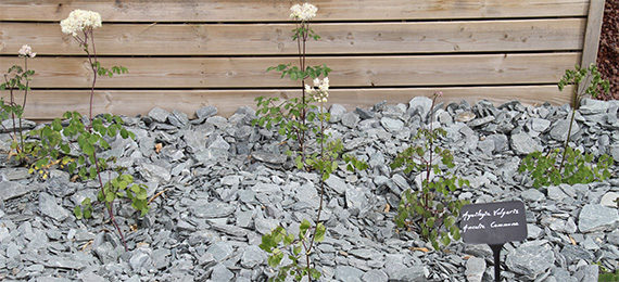 Plante et paillage expo jardin dj cr ation - Plantes filtrantes bassin rennes ...